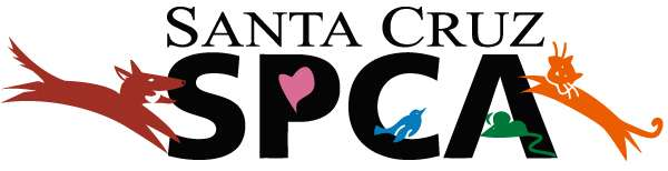 Santa Cruz SPCA: Changing Lives, One Paw at a Time