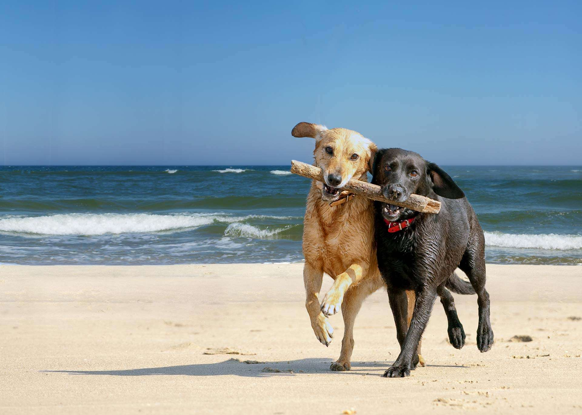 Santa Cruz Has Some Of The Most Beautiful Beaches And Scenic Parks In California However It Can Be Difficult To Find One That Allows Your Furry Friend