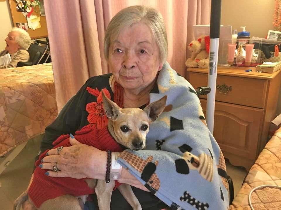Peaceful Paws | Santa Cruz SPCA: Changing Lives, One Paw at